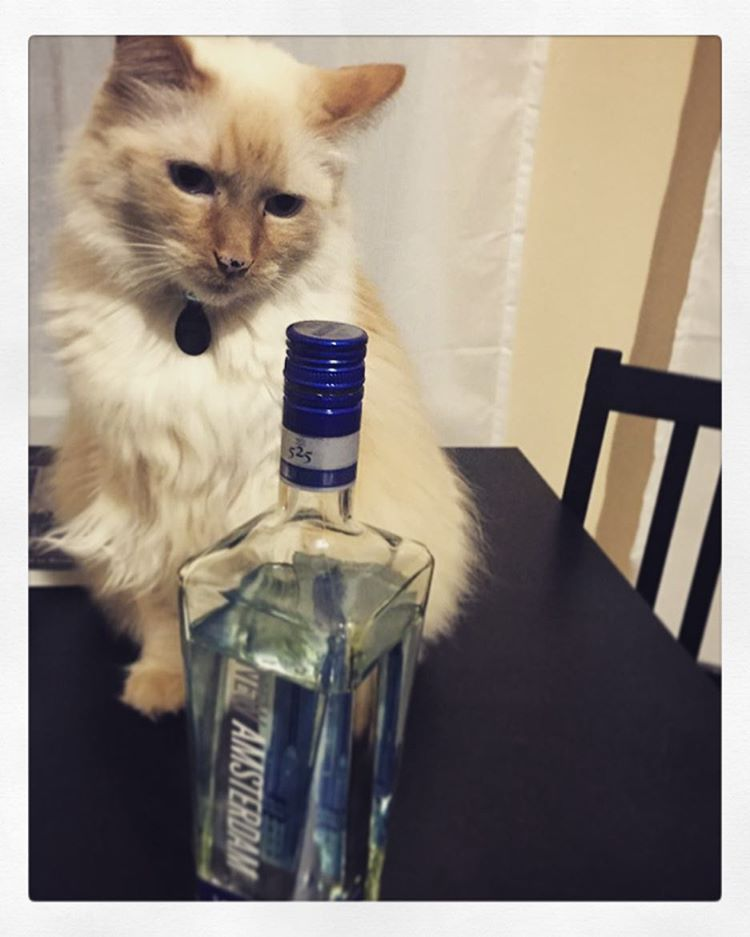 cat with vodka